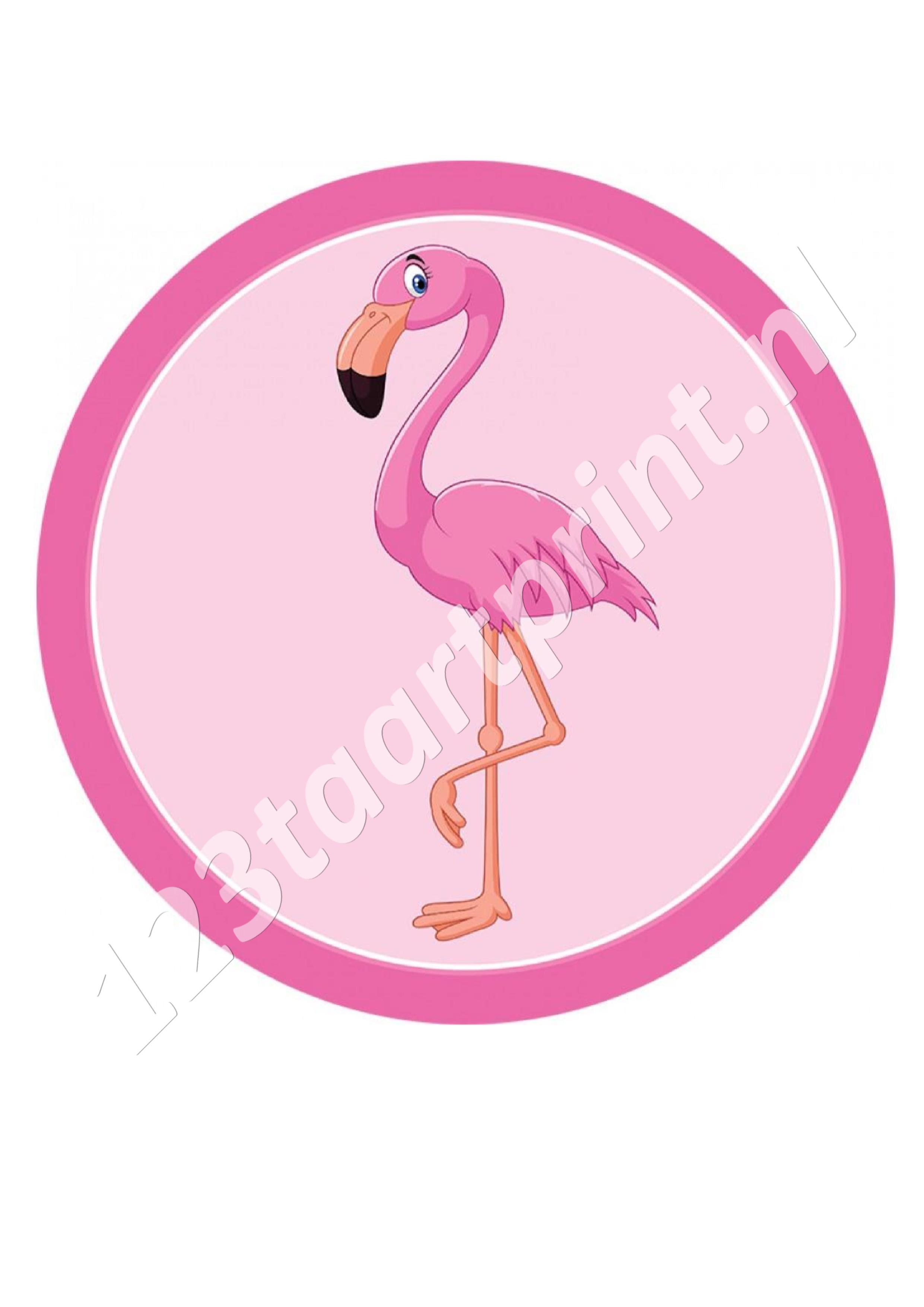 Flamingo rond