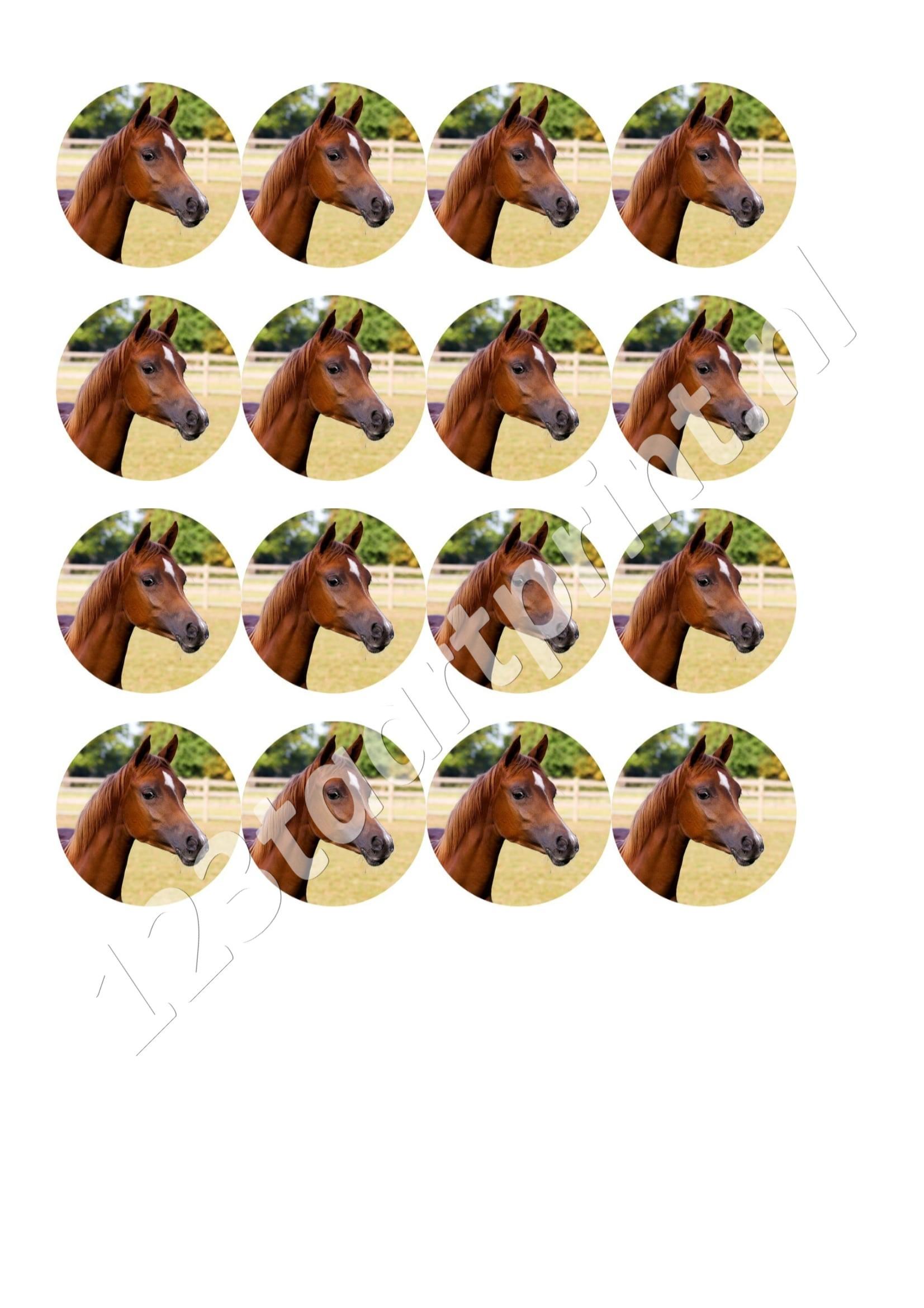 Paardje rond cupcakes