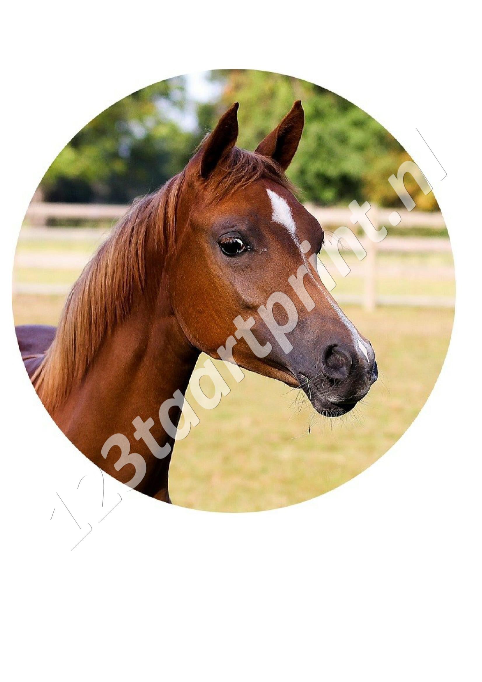 Paardje rond